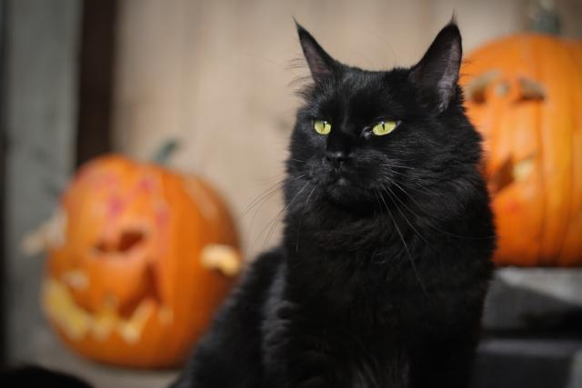 kucing hitam icon hallowen