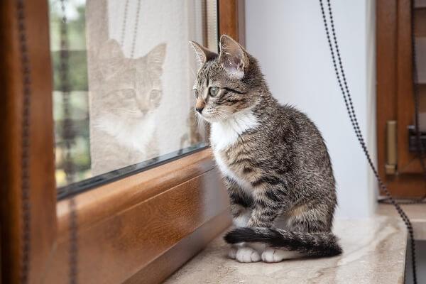 kucing kesepian