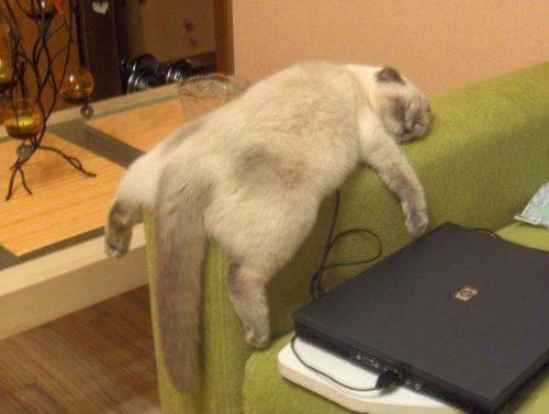 kucing malas makan