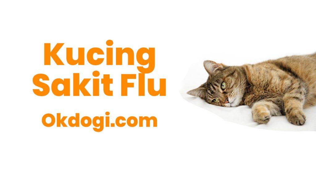 kucing sakit flu