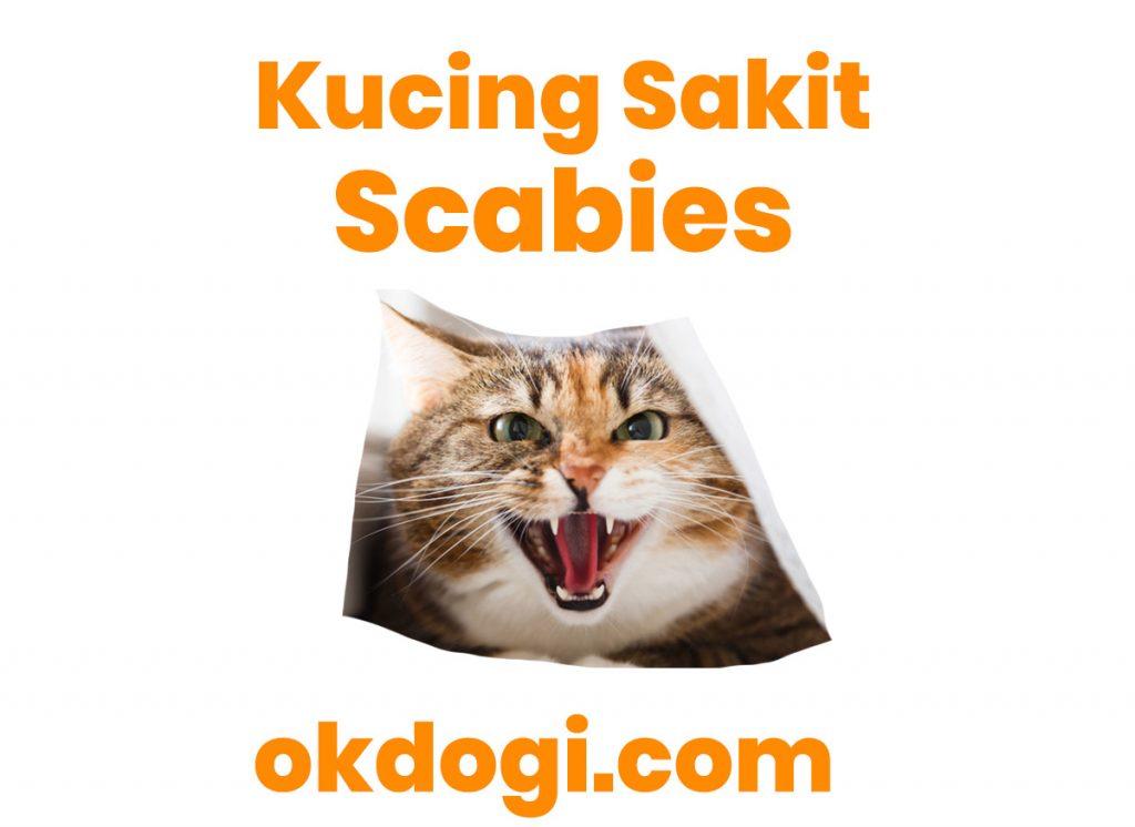 kucing sakit rabies