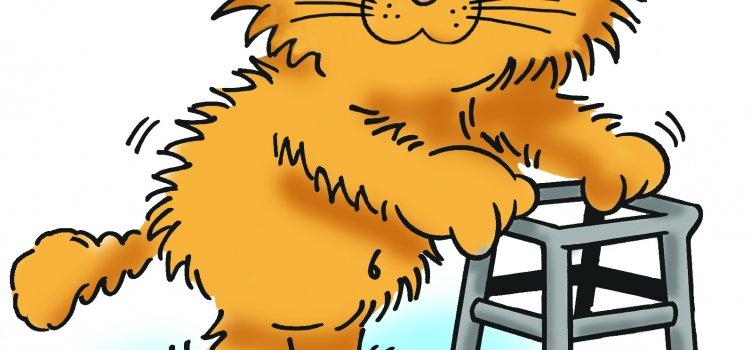 kucing senior