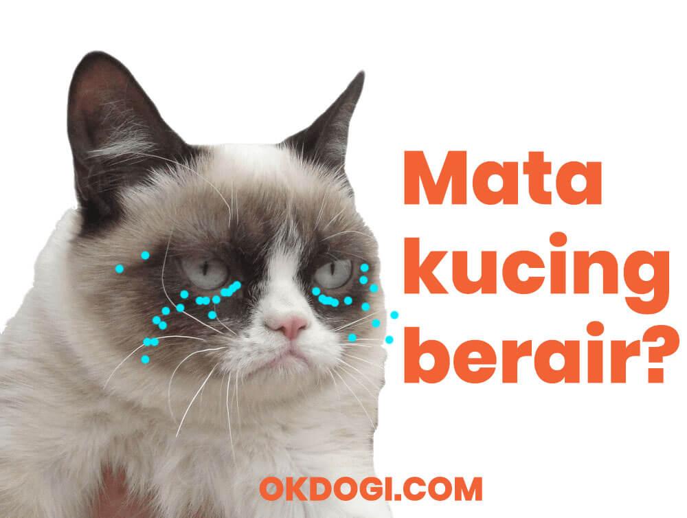 Mata Kucing Berair : Faktor Penyebab & Cara Mengobati