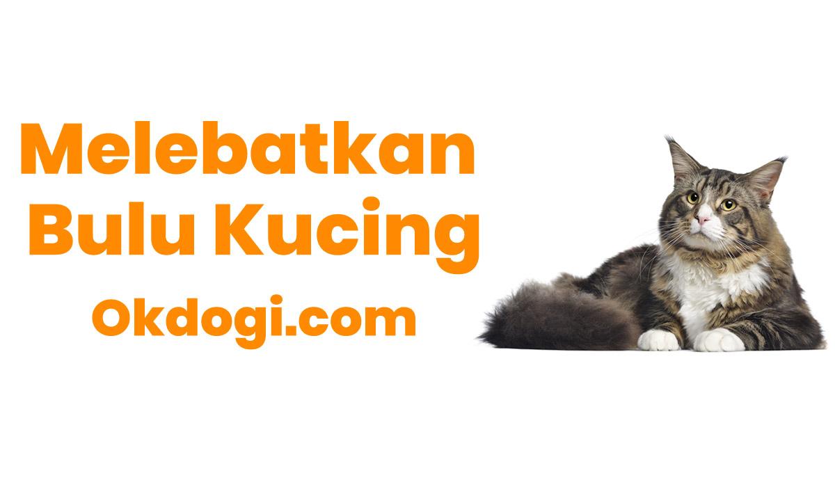 cara melebatkan bulu kucing