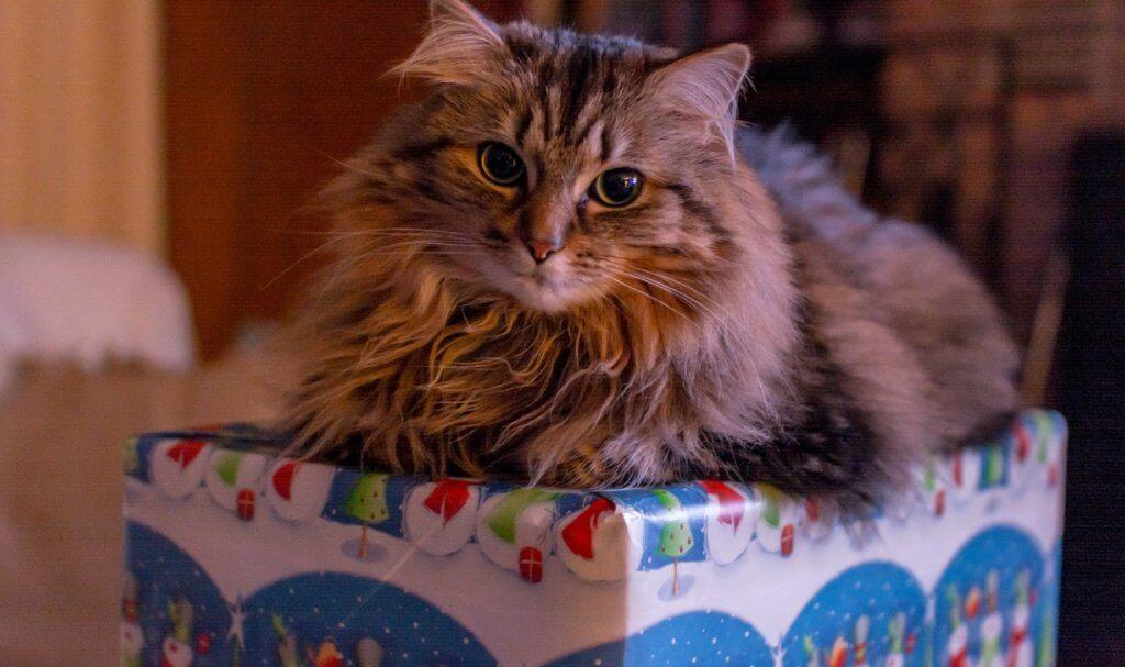 Cara Mengubur Kucing Yang Tepat, Bye Meong :( - Okdogi.com
