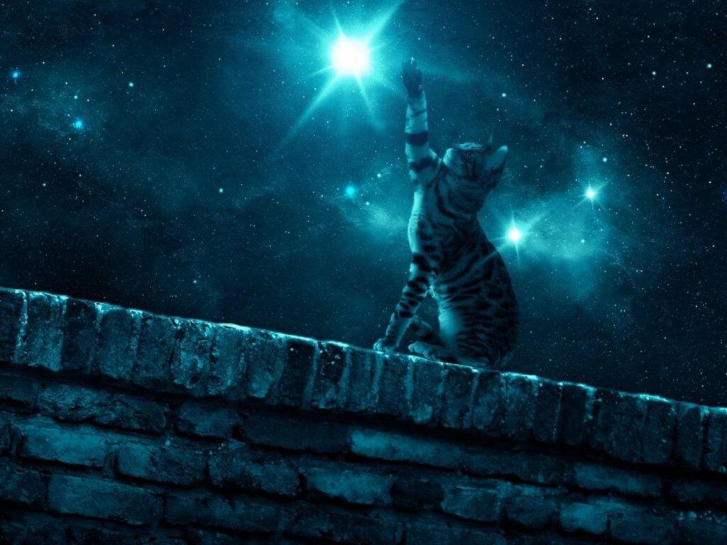 memimpikan kucing