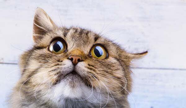 Kucing Stress : Ciri Perilaku & Cara Mengatasinya