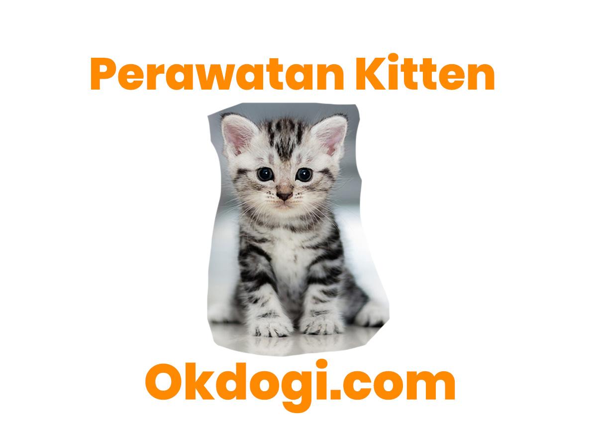 perawatan anak kucing
