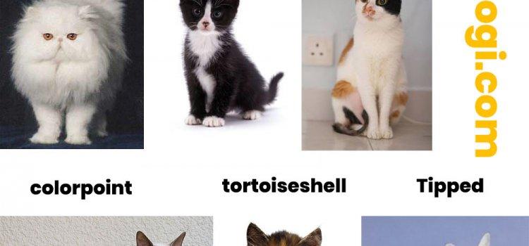 pola warna kucing