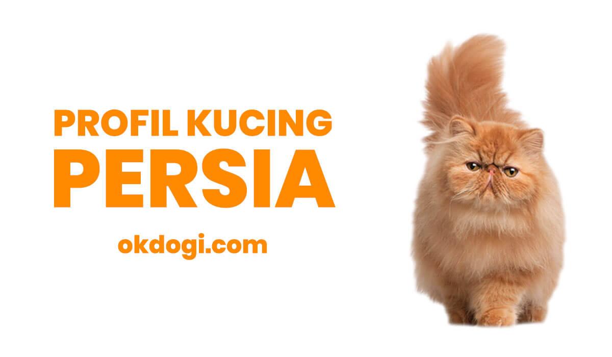 Kucing Persia : Harga, Ciri Fisik dan Cara Merawat