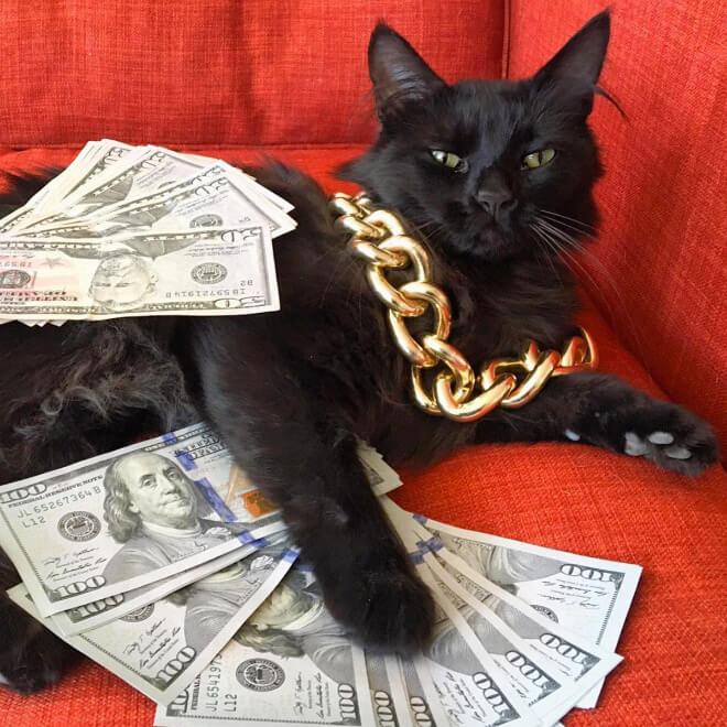 kucing hitam simbol kemakmuran