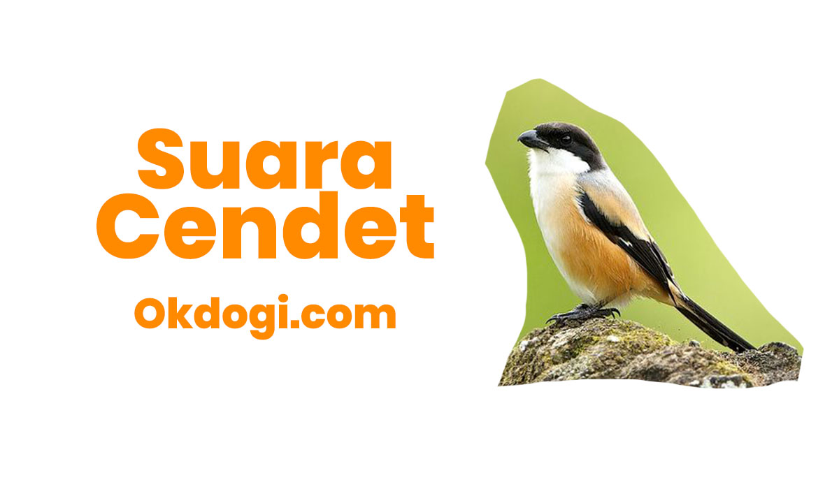 Download Suara Cendet / Pentet Ngalas Kembang dan Madura Mp3
