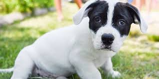 Penyebab dan Cara Terbaik Menangani Anjing Stress