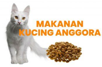 makanan untuk kucing anggora