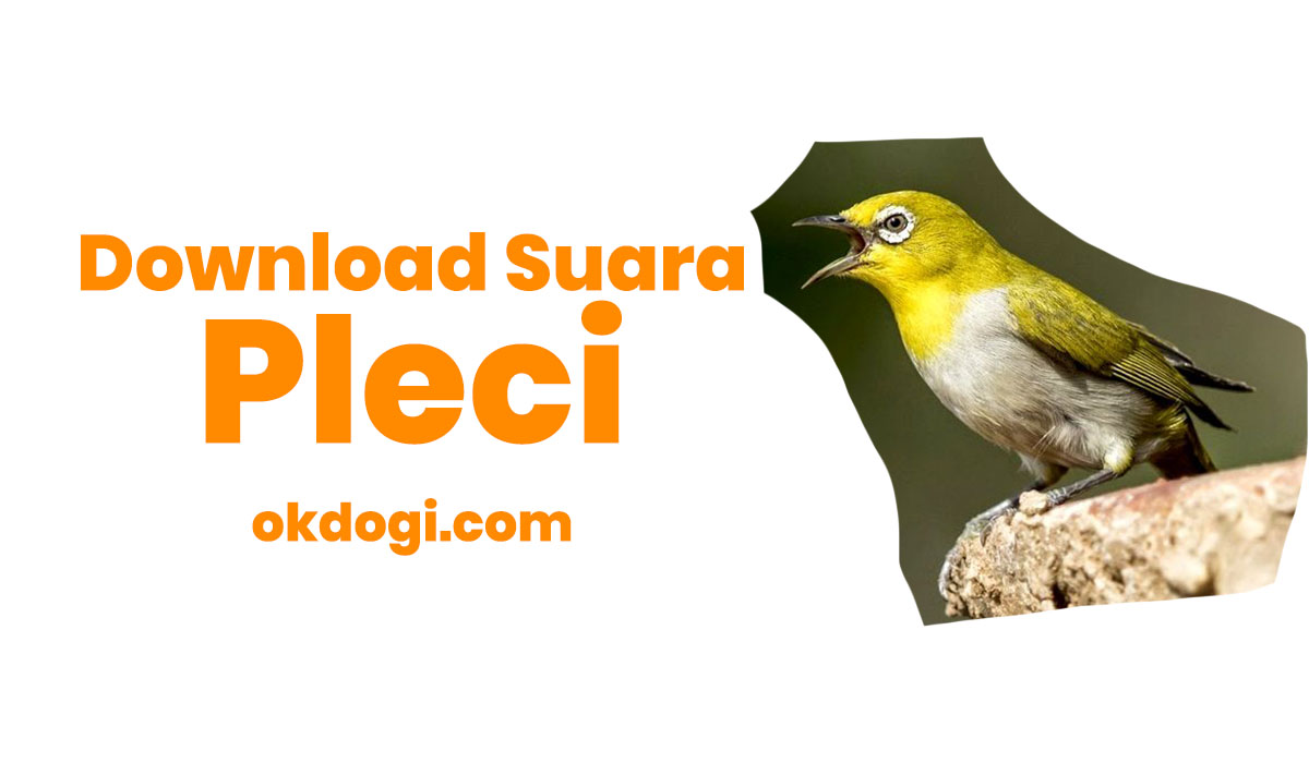 Download Suara Pleci Mp3 Nembak Ngalas Durasi Panjang