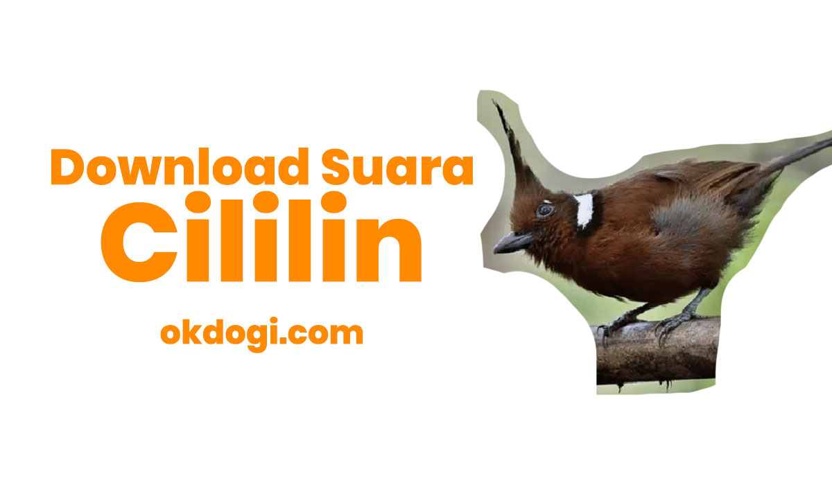 download suara cililin