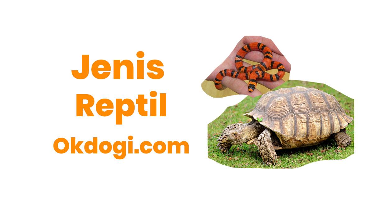 jenis reptil