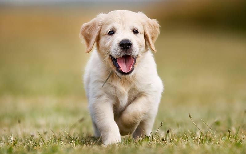 cara memilih anak anjing yang sehat