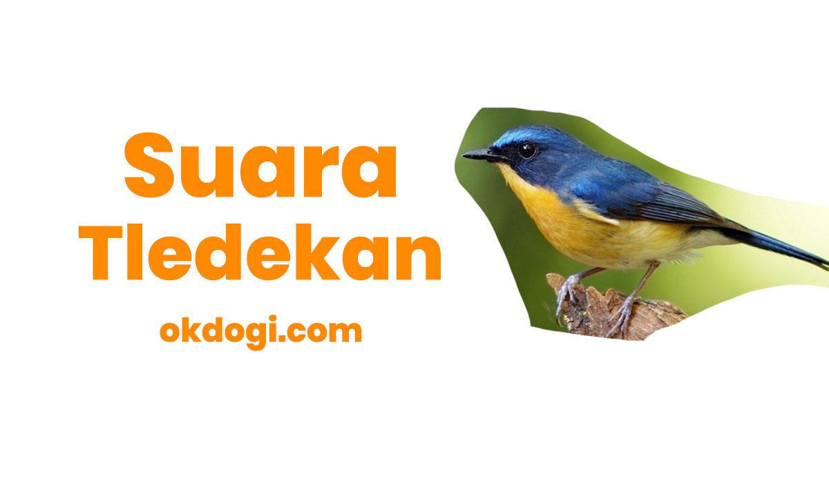 Download Suara Burung Tledekan Gunung Dan Laut Mp3 Okdogi