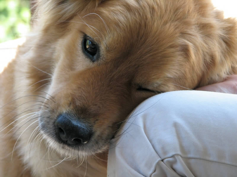anjing ingin di manja