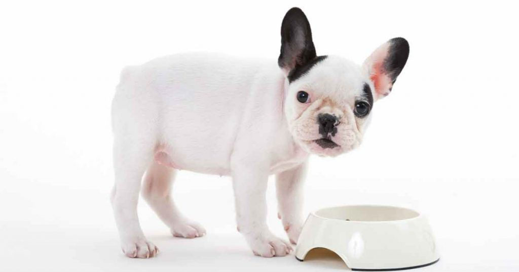 makanan french bulldog