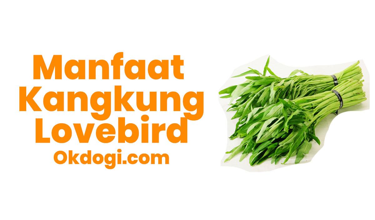 6 Manfaat Kangkung Untuk Lovebird Tarung, LUAR BIASA!