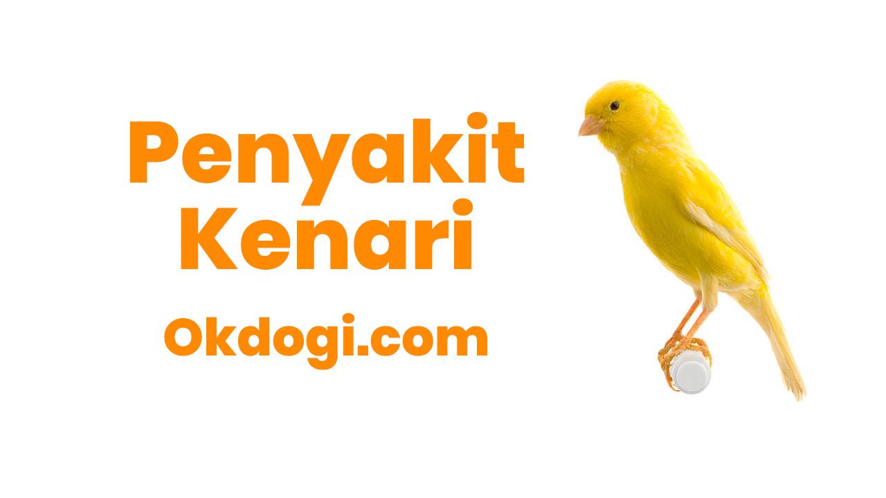 7 Penyakit Berbahaya Bagi Burung Kenari, WASPADA!