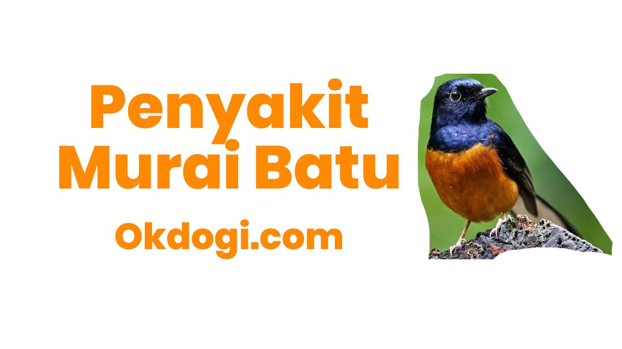 6 Penyakit Umum Bagi Burung Murai Batu, BERBAHAYA!