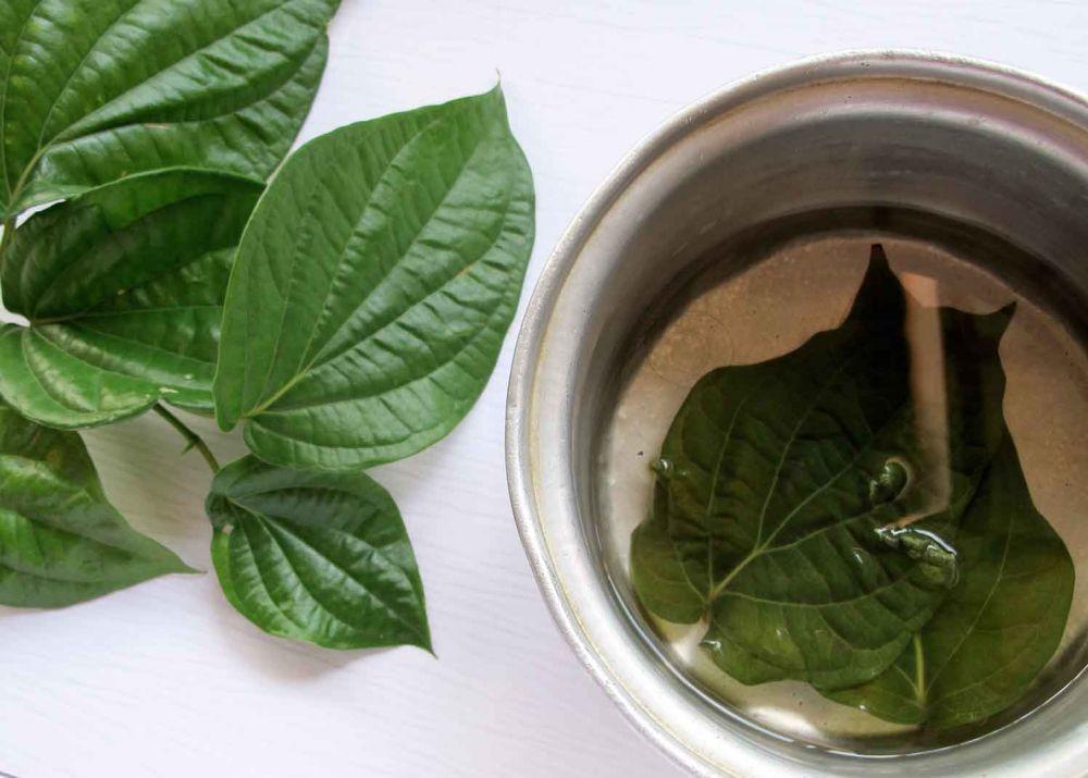 rebusan daun sirih