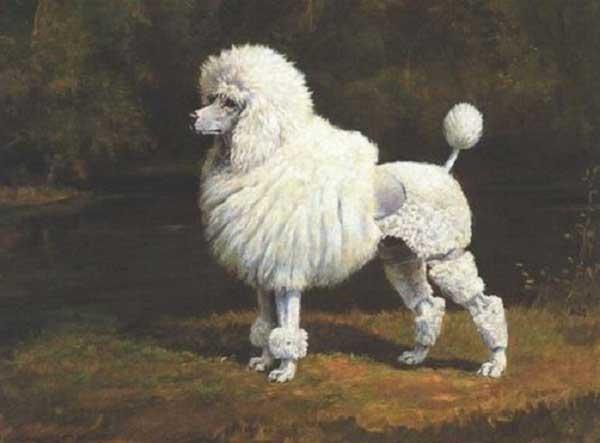 sejarah anjing poodle