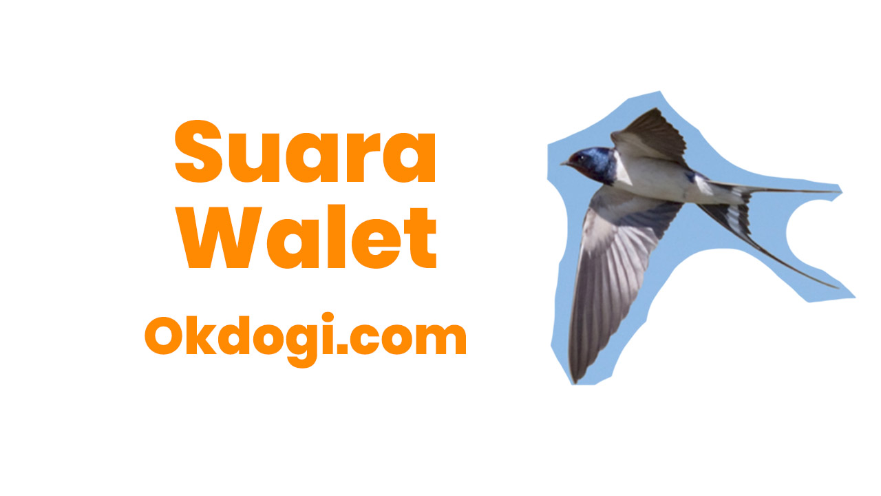 Download Suara Burung Walet MP3 Full Tembakan