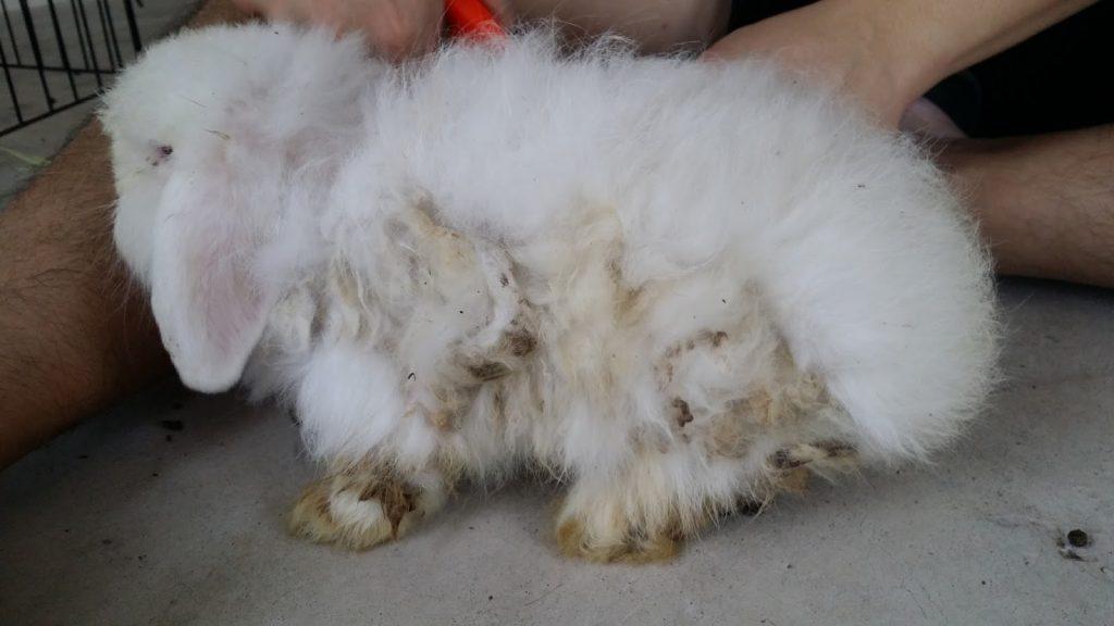 bulu kelinci kusam