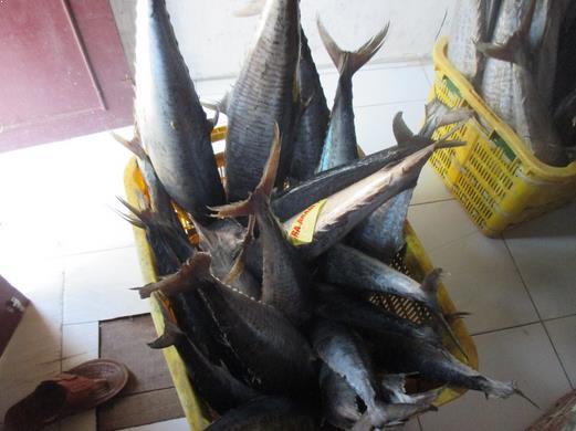 beli ikan tenggiri secara langsung