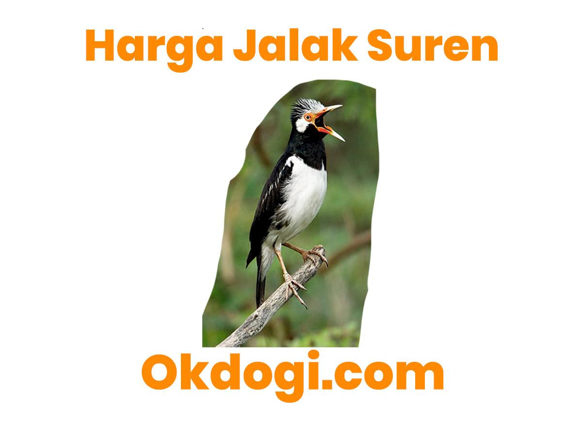 Harga Pasaran Burung Jalak Suren Terbaru 2019, UPDATE TERUS!