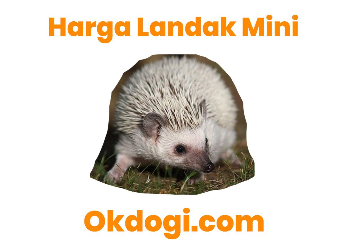 Harga Pasaran Landak Mini Terbaru 2019, UPDATE TERUS!