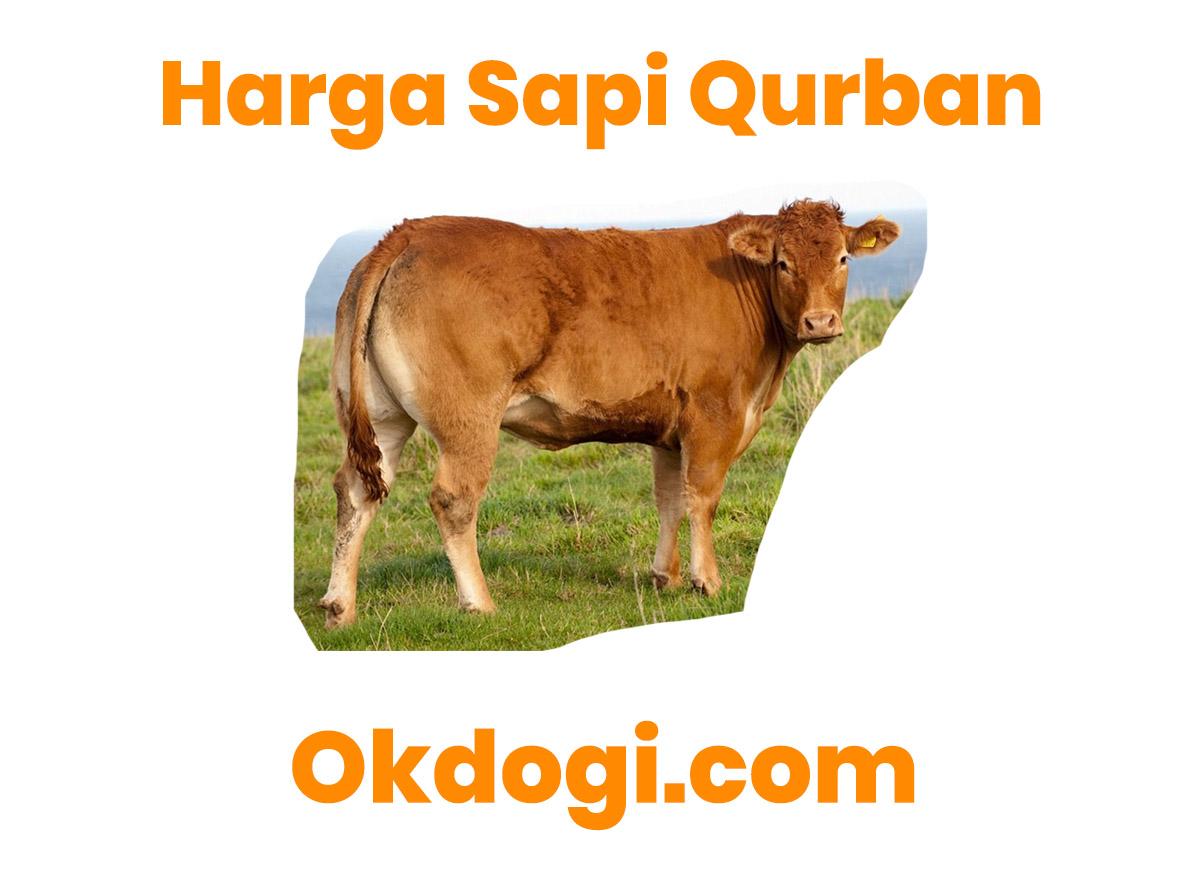 Harga Sapi Qurban Terbaru 2019, UPDATE TERUS!