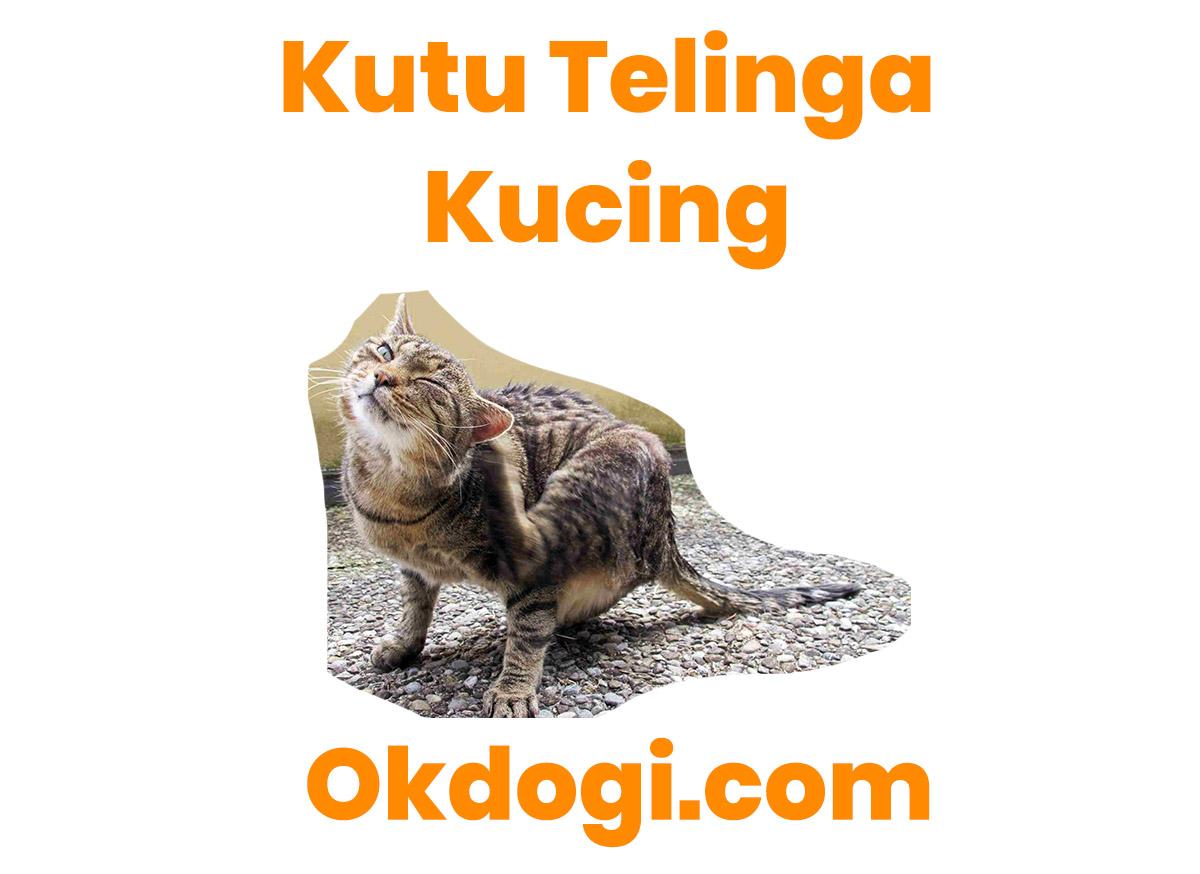 cara mengobati kutu telinga kucing