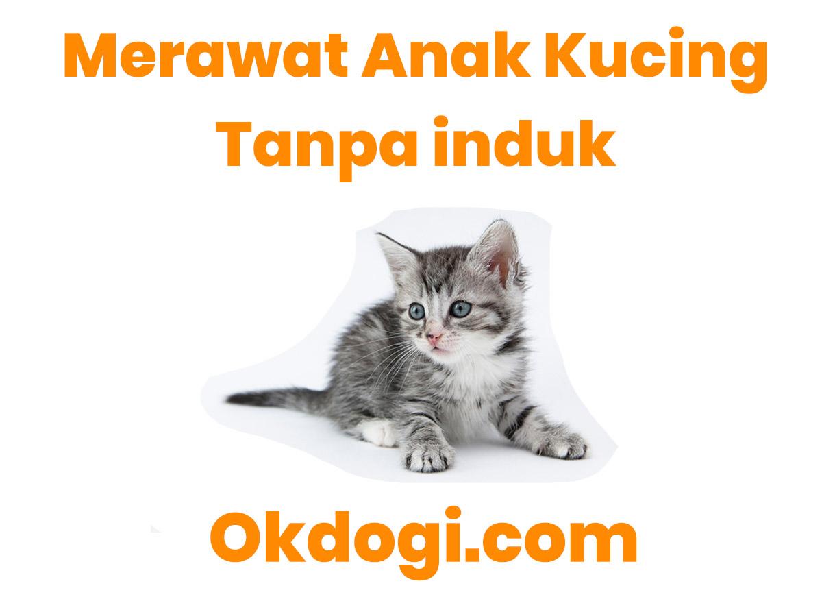 Cara Memelihara Anak Kucing Tanpa Induk Wajib Baca