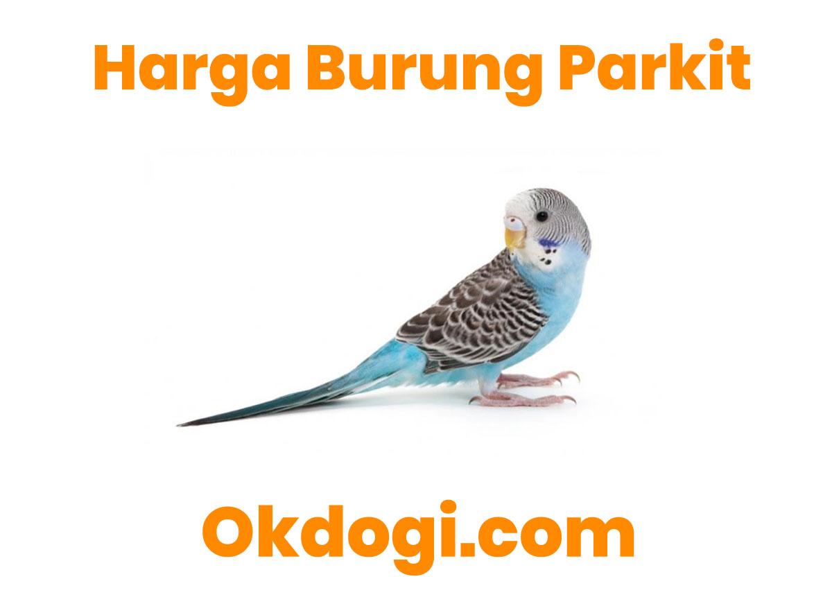 Harga Pasaran Burung Parkit Terbaru 2019, SURVEY LANGSUNG!