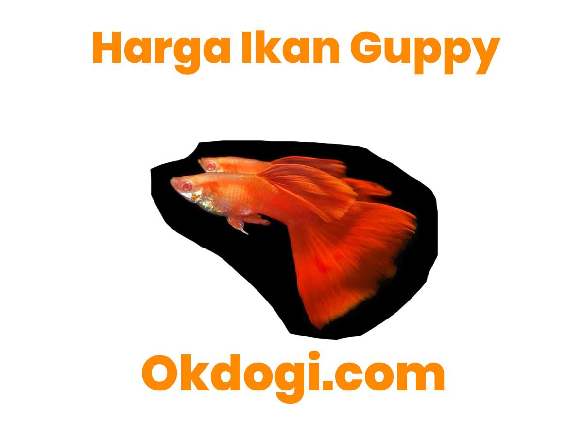 harga ikan guppy