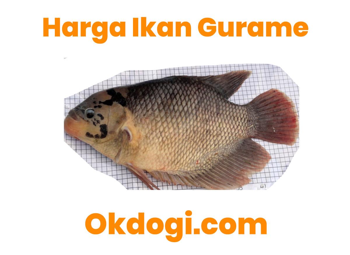 Harga Ikan Gurame Per Kilo Terbaru 2019, UPDATE TERUS!