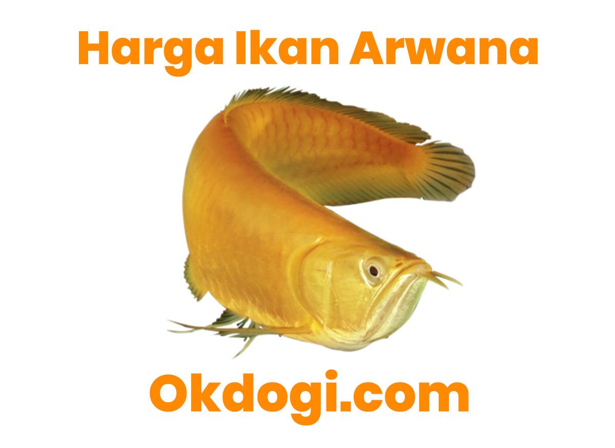 harga ikan arwana