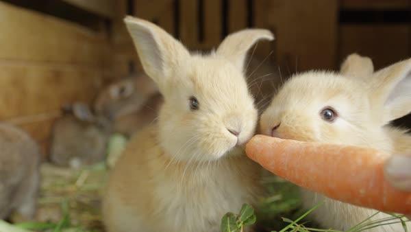 kelinci lebih sering lapar