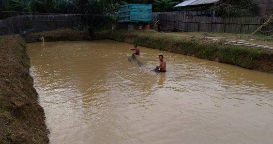 kolam tanah ikan gurame