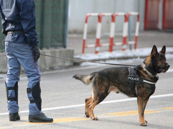 melatih anjing pelacak