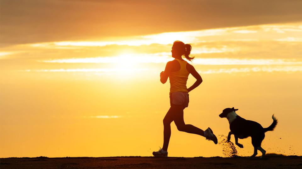 Olahraga bersama anjing