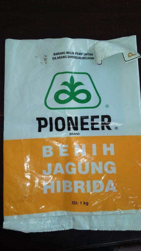 bibit jagung pioneer
