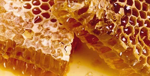 madu untuk musang