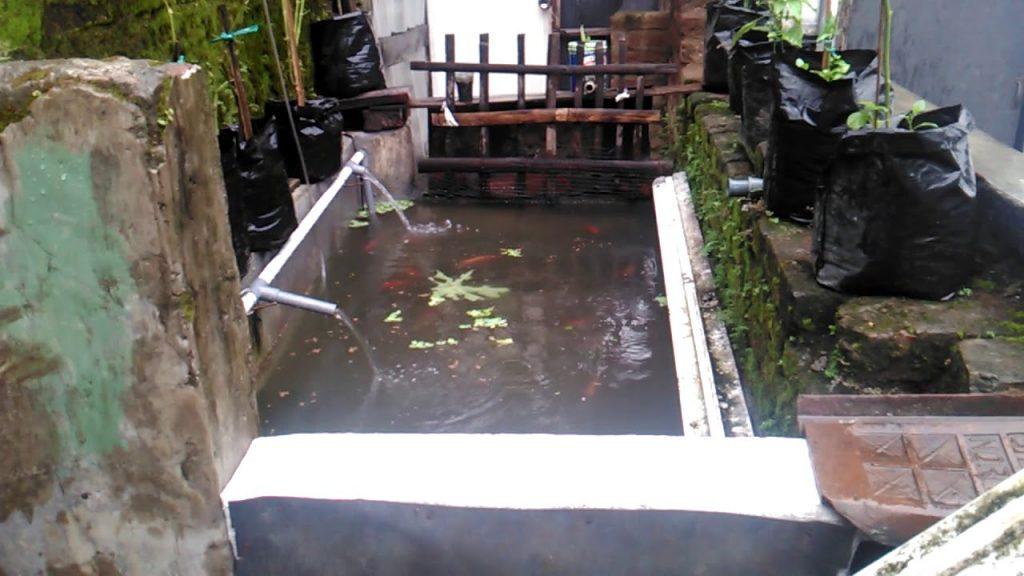 kolam ikan nila minimalis