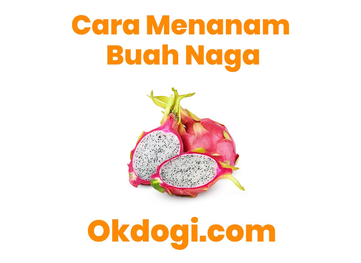 Cara Paten Menanam Pohon Buah Naga, TERBUKTI BERHASIL!